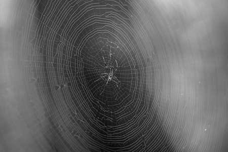 Spider and cobweb photo