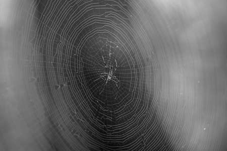 Spider and cobweb photo