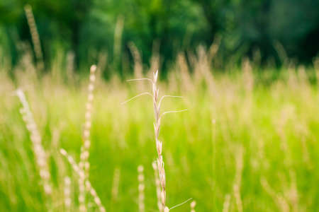 aggregation: Selective focus to let the grass has a unique charm