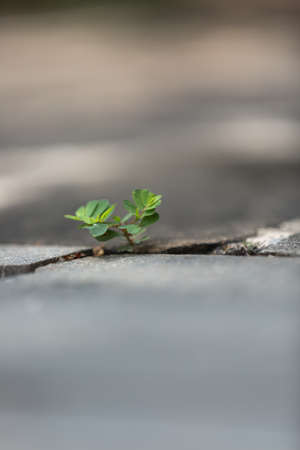 crevice: the tiny plant in the square crevice