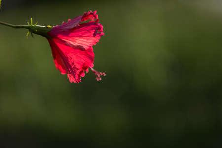 backlighting: Flower backlighting
