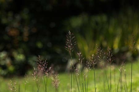 hassock: grass spike, close-up