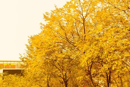 gold tree: Gold tree  Stock Photo