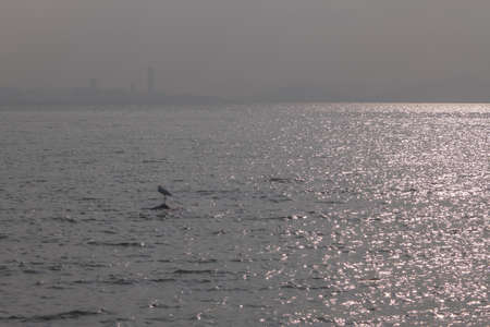 seabirds: Shenzhen Bay, seabirds Stock Photo