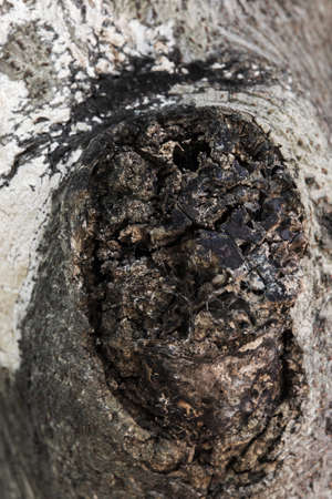 decaying: Decaying trunks