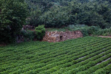arbres fruitier: Farmland and fruit trees