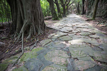 road and path through: Outdoor lane backgrounds