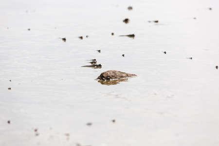 mudskipper: The beach during low tide