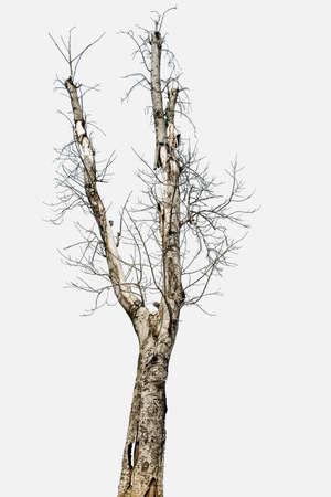 toter baum: Toter Baum Lizenzfreie Bilder