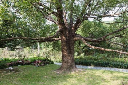 luxuriant: tree s