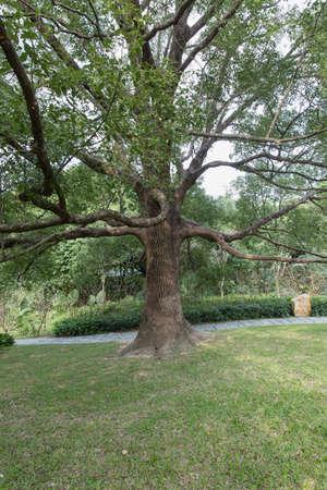 plenitude: Tree