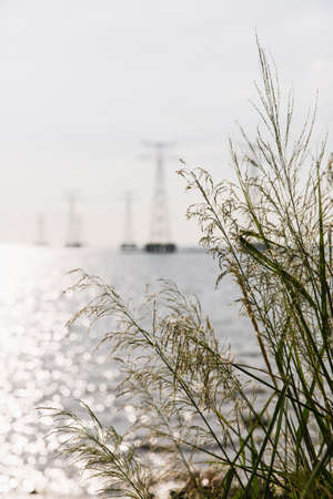 power delivery: Sea of reeds
