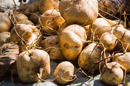 s��kartoffel: sweet potato Lizenzfreie Bilder