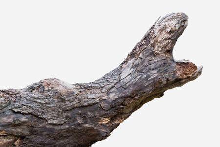 giant snakehead: Trunk