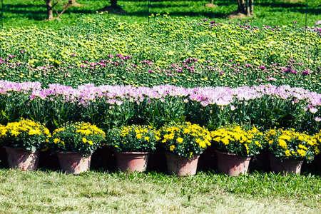 flower nursery: parterre flower nursery