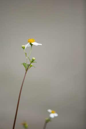 bourgeon: Little flower