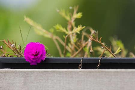 batten: Little flower