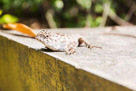 blooded: Lizard