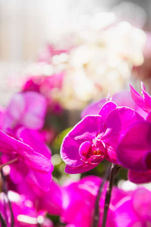 close up: Close up to orchid flowers Stock Photo