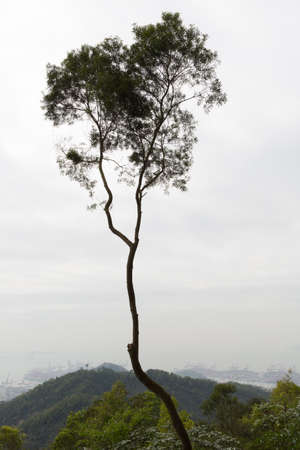 foggy hill: tree hill and sky