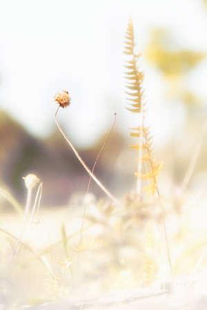 perish: weeds