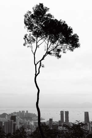 gloom: tree and sky