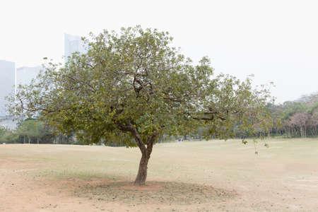 gloom: big tree