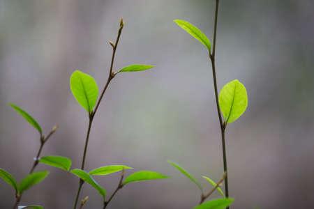 greenery: greenery