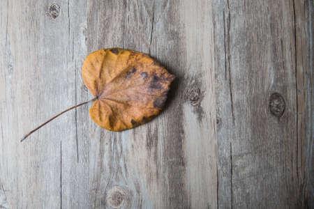 perish: dry leaf