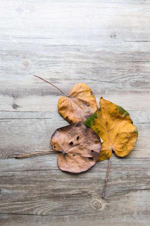 perish: dry leaves Stock Photo