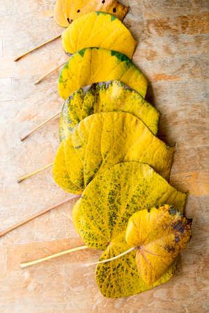 perish: yellow leaves Stock Photo