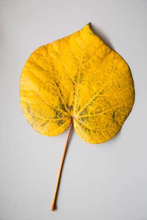 perish: yellow leaf