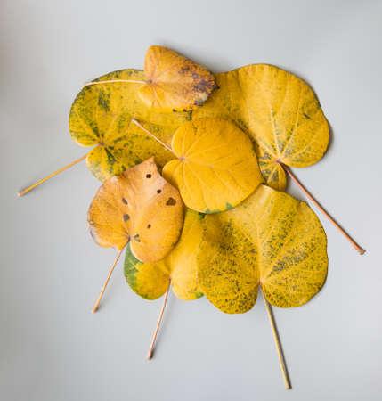 perish: leaves Stock Photo