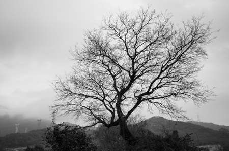 woodland sculpture: bare tree isolated from the cloudy sky