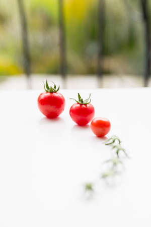 sudio: tomatoes in a row Stock Photo