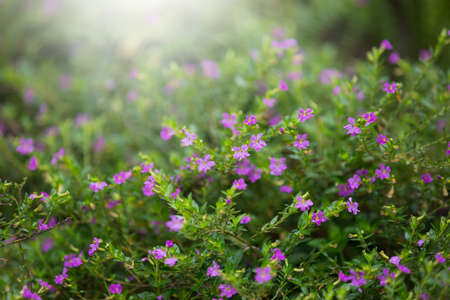 samll: Little purple flower in shrubs Stock Photo