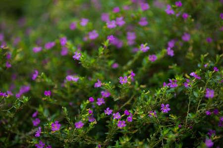 samll: little flowers in shrubs