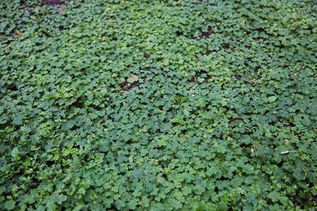 weeds: green weeds