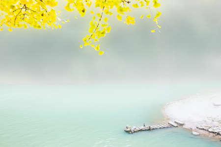 ginkgo tree: Ginkgo tree and water Stock Photo