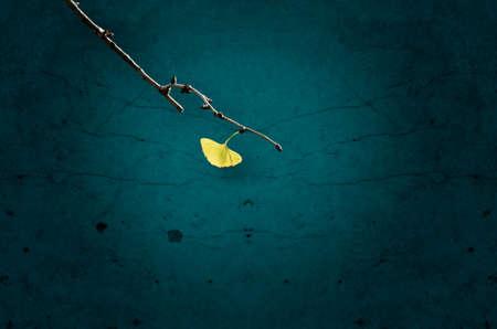 ginkgo leaf: Single yellow ginkgo leaf on branch,against the background of dark wall.