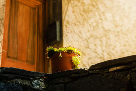 potted plant: potted plant in front of gate Stock Photo