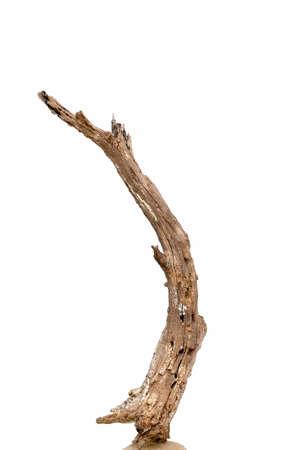 Rotten dead tree trunk