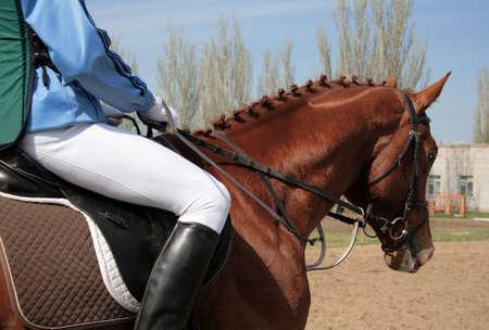Closeup shot of a dressage horse photo