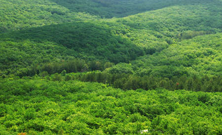 canopy: Aerial view of a green mountain forest
