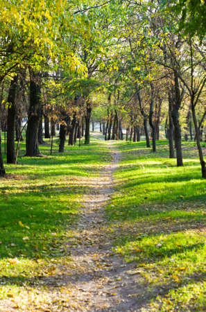 Beautiful lane in an autumn park Stock Photo - 5743042
