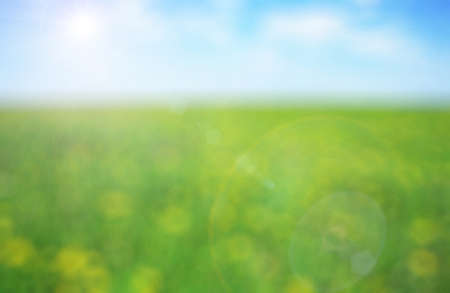 Green meadow with yellow flowers on a sunny day - defocused background photo