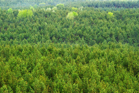 Aerial view of a green mountain forest photo