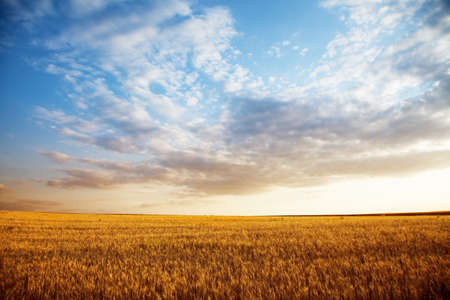 Summer landscape - wheat field at suset Stock Photo - 14365452