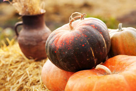 Huge pumpkin in a hay stack Stock Photo - 16027558