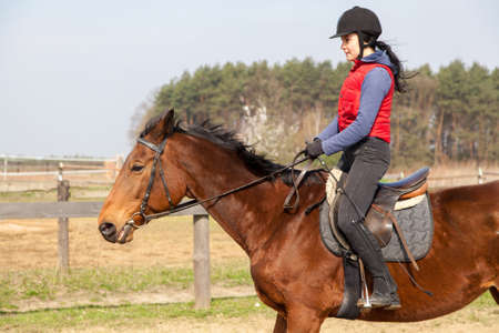 equitation: Young woman riding a horse
